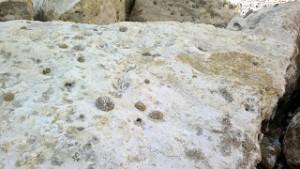 sevensistersfossils