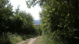 wealdenpath1